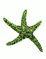 Sterling Silver Sea Star with Olivine Crystals Pendant 991
