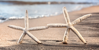 starfish couple