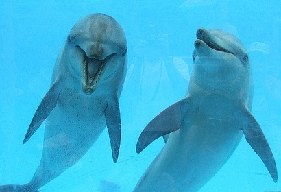 smiling group dolphins